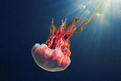 Jellyfish-Madness12