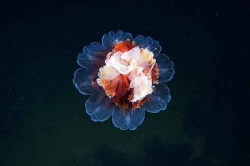 Jellyfish-Madness13