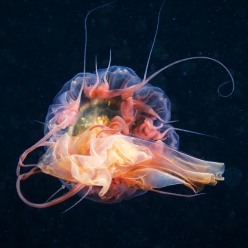 Jellyfish-Madness2